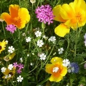 Blumenpracht in Malgarten